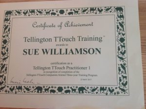 P1 Certificate